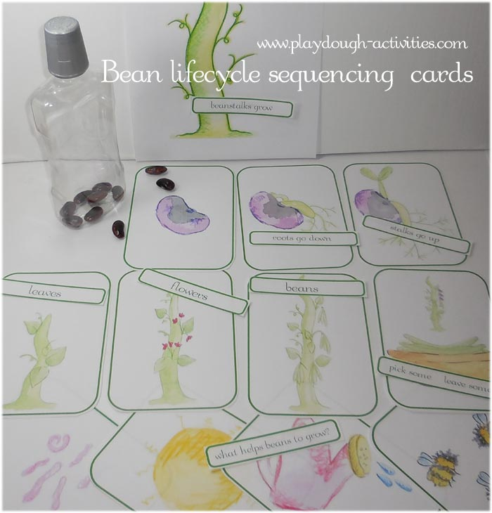 Bean plant lifecycle sequence cards