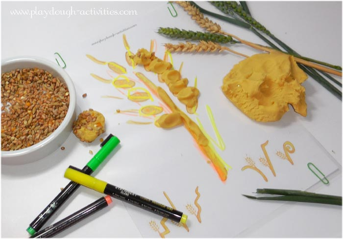 Harvest wheat playdough modelling and tracing activity