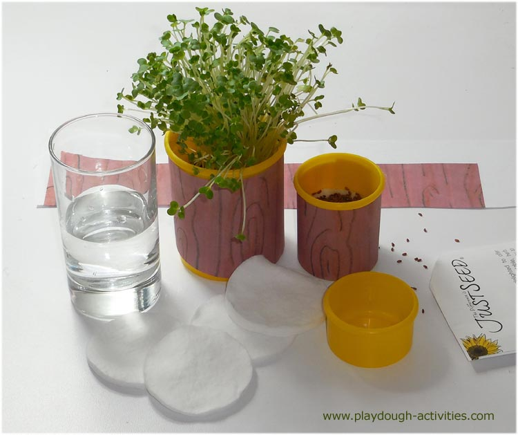 Recycled Play-Doh containers - cress seed plant pots