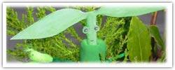 Bowtruckle playdough