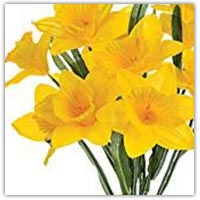 Buy artificial daffodil flowers on amazon.co.uk