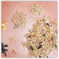 Buy bird seed to sort and feed from Amazon.co.uk