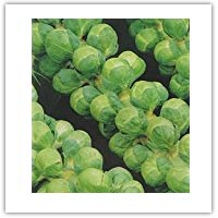 Buy brussel sprout seeds on amazon.co.uk
