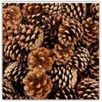 Fir pine cones for playdough activities