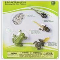Buy a set of frog lifecycle models on amazon.co.uk