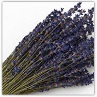 Buy lavender sprigs on Amazon.co.uk