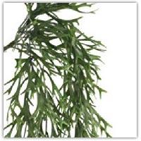 Buy plastic seaweed on amazon.co.uk