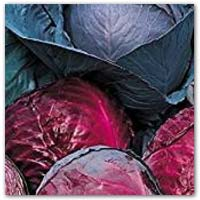 Buy red cabbage seeds to grow your own on amazon.co.uk